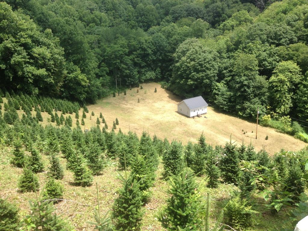 our christmas tree farm located in newland north carolina newland is located in between boone and sugar mountain nc